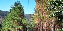 Foto da rede de distribuição de energia da COCEL em campo largo em meio à vegetação