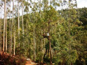 Ao plantar árvores deve-se respeitar distância mínima de 10 m da rede de distribuição de energia